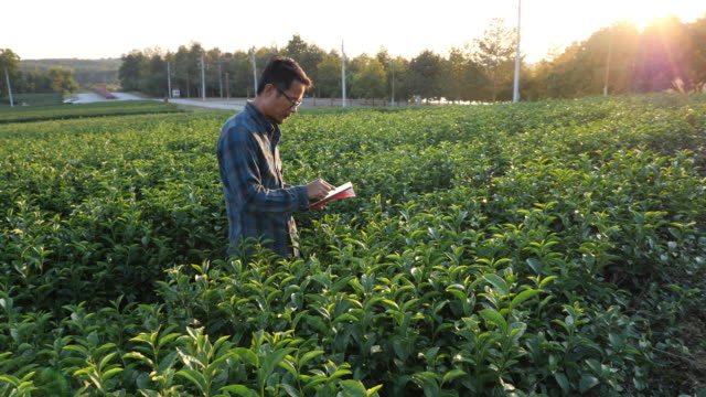 farmer using digital tablet recording data in the green tea plantation - plantation stock videos & royalty-free footage