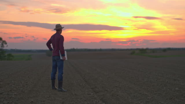 ws farmer using laptop in idyllic,rural plowed field at sunset - rural scene stock videos & royalty-free footage