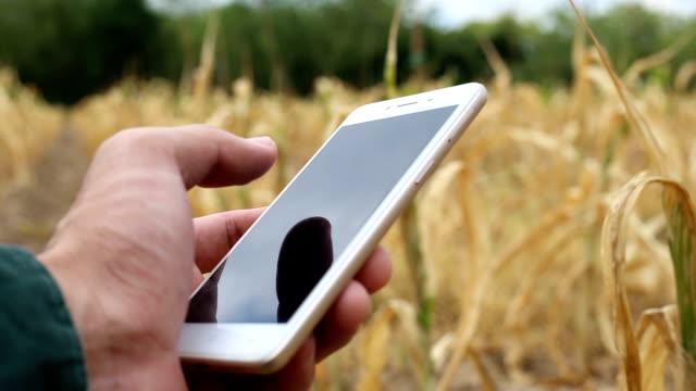 vídeos de stock, filmes e b-roll de fazendeiro usando smartphone para verificação de planta no campo de milho - cena rural