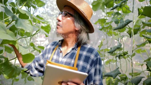 農家を監視する技術のタブレット コンピューターを使用して、制御および調整主導、雰囲気、湿度、水位と垂直または屋内農業の収穫の時間を追跡します。業界 4.0 - グリーンハウス点の映像素材/bロール