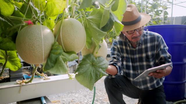 農家を監視する技術のタブレット コンピューターを使用して、制御および調整主導、雰囲気、湿度、水位と垂直または屋内農業の収穫の時間を追跡します。業界 4.0 - 農業点の映像素材/bロール