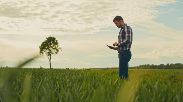 ws slo mo farmer using tablet in field - tartan stock videos & royalty-free footage