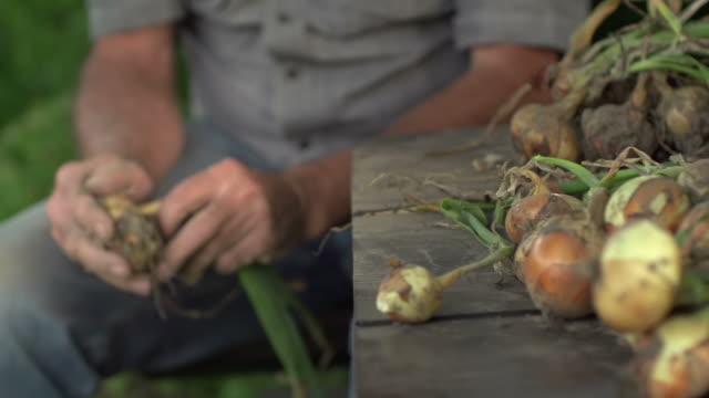 vidéos et rushes de ralenti: farmer - doigt humain