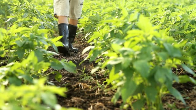 farmer walking in cultivated field - sesame stock videos and b-roll footage