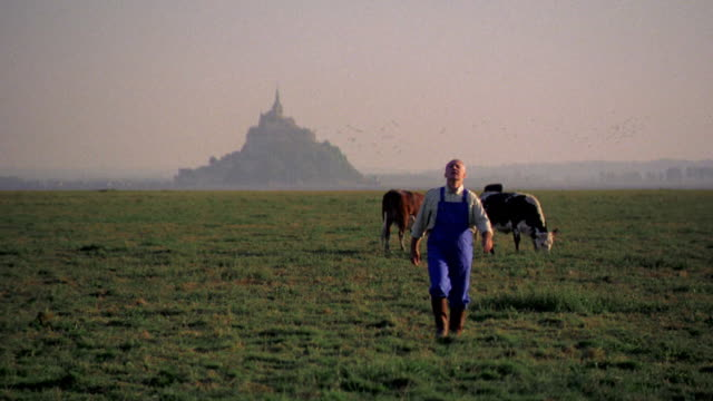 vídeos de stock, filmes e b-roll de farmer walking in field with cows in background away from mt. st. michel / normandy, france - pasture
