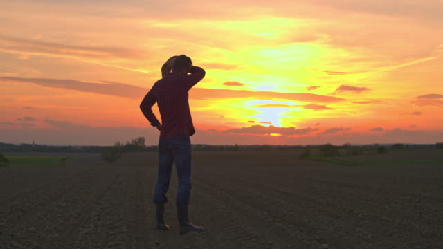 ms farmer walking in idyllic,rural plowed field at sunset - produttore video stock e b–roll