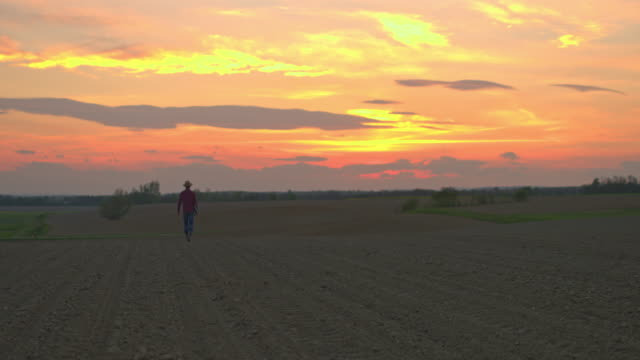 vídeos de stock e filmes b-roll de ws farmer walking in idyllic,rural plowed field at sunset - trabalhador rural