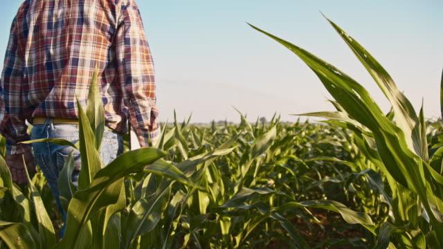 vidéos et rushes de agriculteur, marchant dans les champs avec une tablette numérique - vue de dos