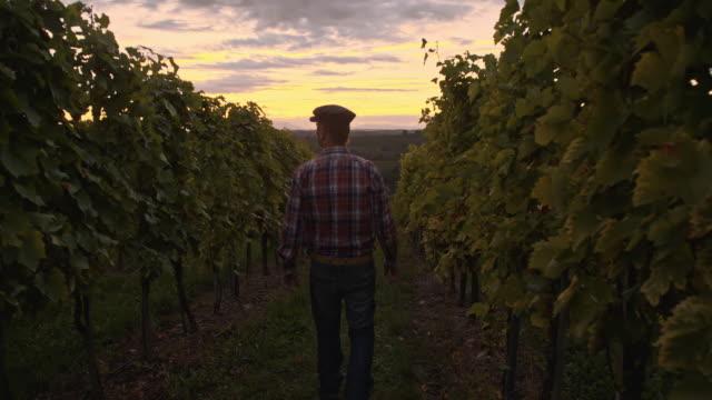 Farmer walking in the vineyard