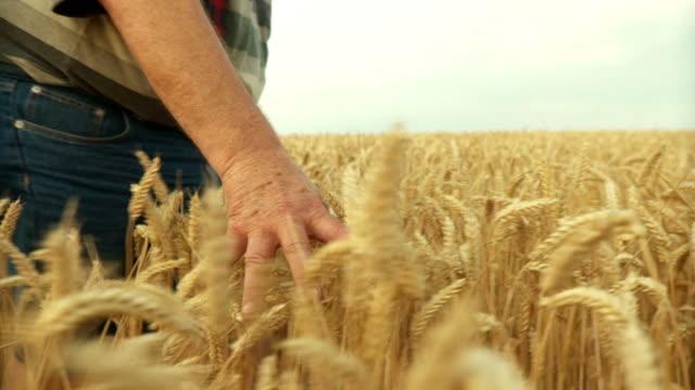 HD SLOW-MOTION: Farmer Walking In Wheat