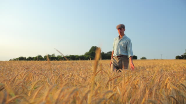 WS PAN Farmer walking through barley field / St Albans, Hertfordshire, United Kingdom