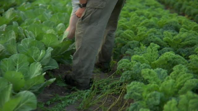 vidéos et rushes de slo mo ms farmer walking through vegetable garden, wilmington, north carolina, usa - jardin potager