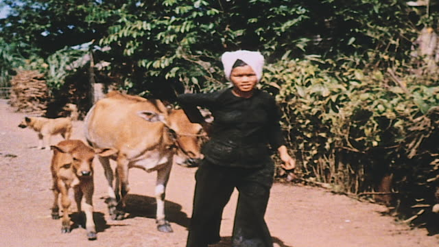 farmer walking with oxen and young civilian entering dwelling / vietnam - 牛車点の映像素材/bロール
