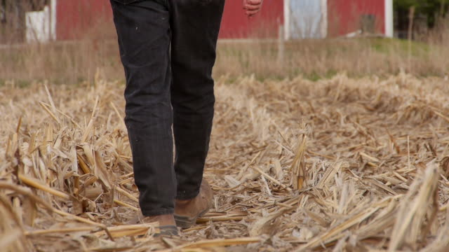 farmer walks over stubble and stalks after corn harvest. - stubble stock videos and b-roll footage