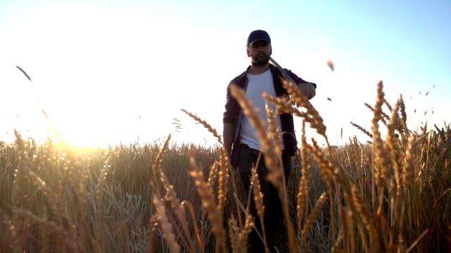 農家夕暮れ時の散歩をトリミング - 農学者点の映像素材/bロール