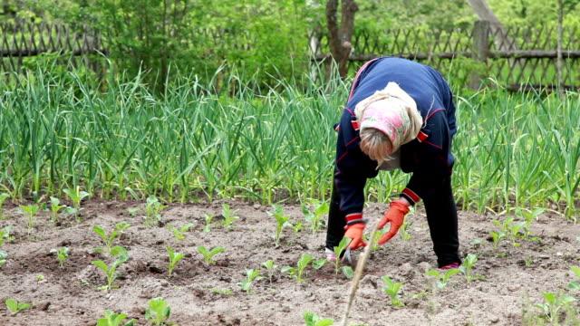 bonde ogräsrensning kål växterna med en hoe - trädgårdshandske bildbanksvideor och videomaterial från bakom kulisserna