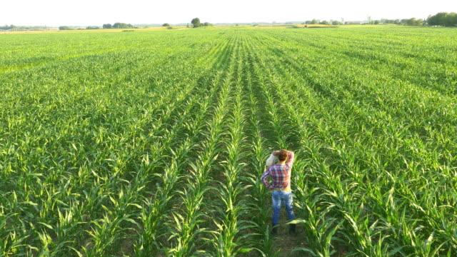 vídeos de stock e filmes b-roll de antena agricultor limpando a testa entre plantas de milho - aviation fatigue