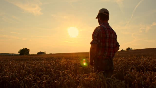 ws cs farmer wiping his forehead at sunset - wheat stock videos and b-roll footage