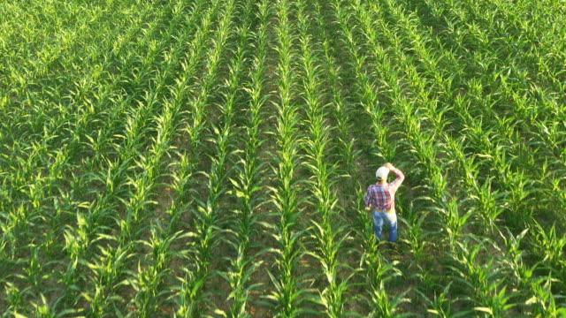 vídeos de stock e filmes b-roll de antena agricultor limpando a testa no campo de milho - aviation fatigue