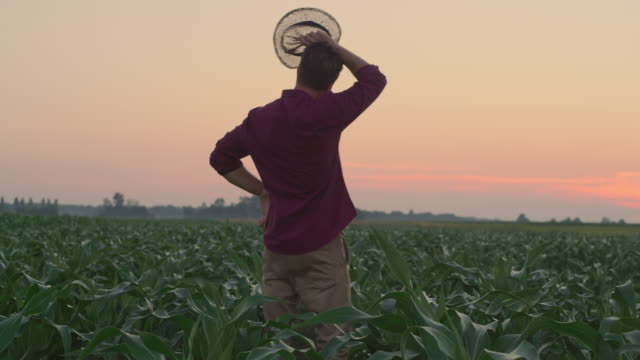ws farmer wiping off sweat from forehead while walking in the field at sunset - sweat stock videos & royalty-free footage