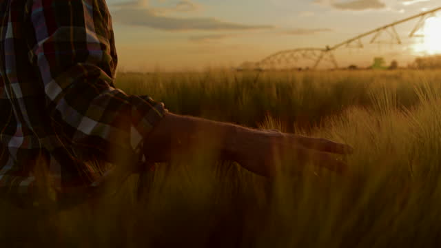 小麦の灌漑フィールドを歩くキャップを持つslo mo農家 - 穀物 ライムギ点の映像素材/bロール