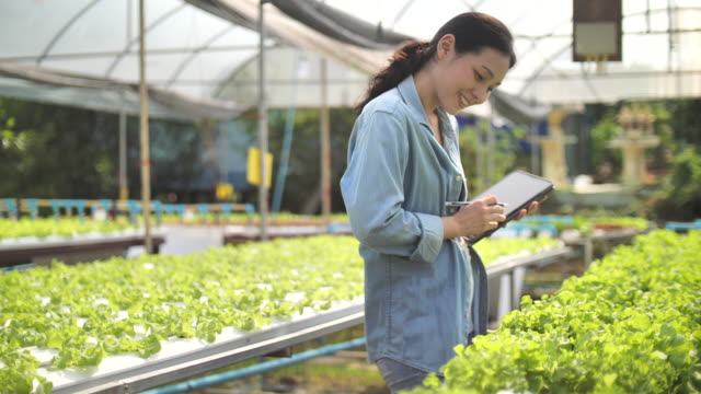 farmer with a digital tablet checking organic hydroponic vegetable cultivation farm :agriculture technology - hydroponics stock videos & royalty-free footage
