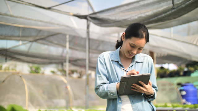 farmer with a digital tablet checking organic hydroponic vegetable cultivation farm :agriculture technology - botany stock videos & royalty-free footage