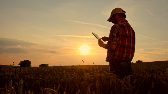 ws ds farmer with a digital tablet in the field - farm bildbanksvideor och videomaterial från bakom kulisserna