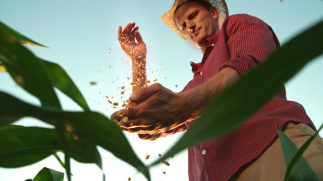 super slo mo farmer mit einem hat schröpfen maiskerne auf dem feld - nutzpflanze stock-videos und b-roll-filmmaterial
