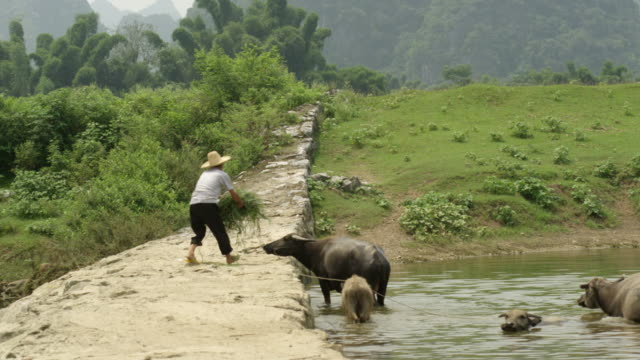 Farmer with Animals