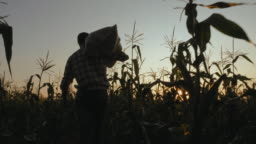 Farmer with bag of corn in the field