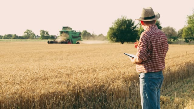 farmer with digital tablet watching combine harvester harvesting sunny wheat crop,slow motion - tractor stock videos & royalty-free footage