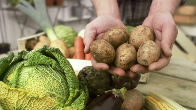 farmer with ecological vegetables, sweden. - savoy cabbage stock videos & royalty-free footage