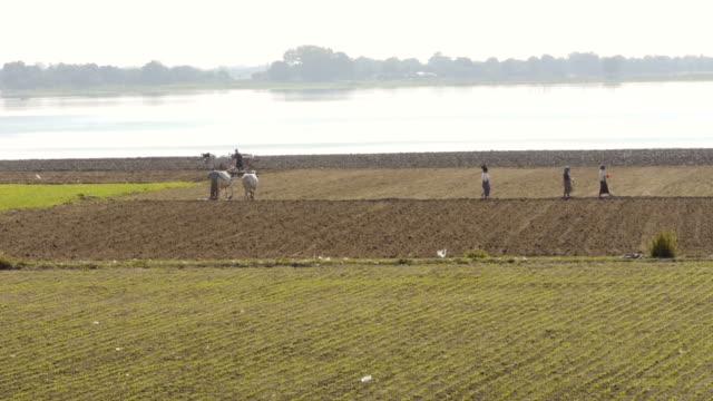 farmer with ox cart and women in amarapura, myanamar - ox cart stock videos & royalty-free footage