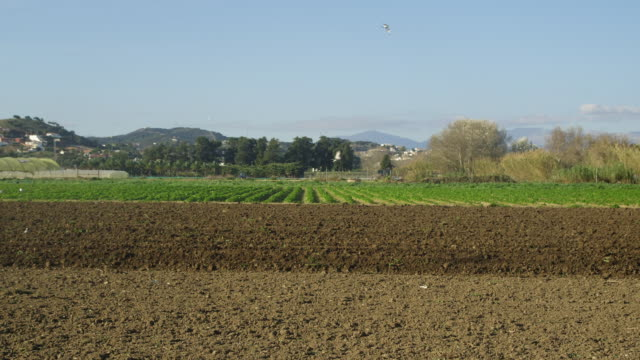 ws farmer with tractor ploughing field and birds picking up seeds / almayate, andalusia, spain   - 2k resolution stock videos and b-roll footage