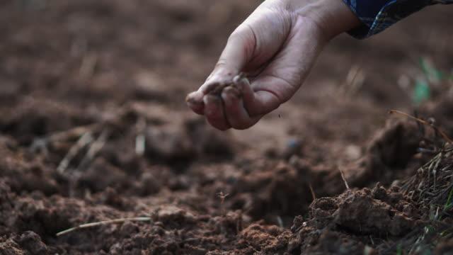 landwirtin überprüft bio-boden landwirtschaft reisfeld terrasse weizenfeld während einer sommertrockenzeit - traktor stock-videos und b-roll-filmmaterial