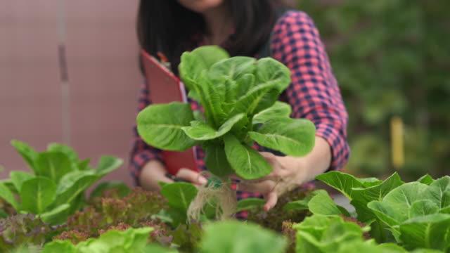 landwirtin überprüft qualität von frischen hydroponischen pflanzen, pflanzen wachsen in gewächshaus unterstützt - studenten stock-videos und b-roll-filmmaterial
