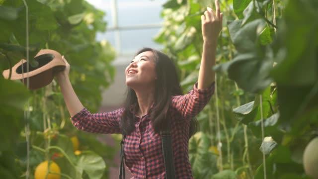 vidéos et rushes de femme d'agriculteur vérifiant la qualité des melons frais ou des plantes poussant en serre soutenue, bras tendus gestes - jardin potager