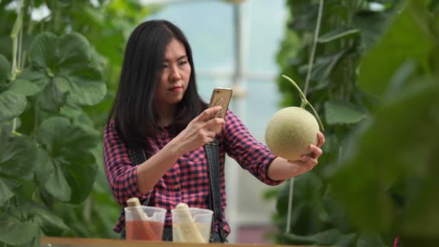 landwirtin überprüft qualität von melonen-hydroponikpflanzen, pflanzen, die im gewächshaus wachsen, e-learning und e-commerce-konzept - biologie stock-videos und b-roll-filmmaterial