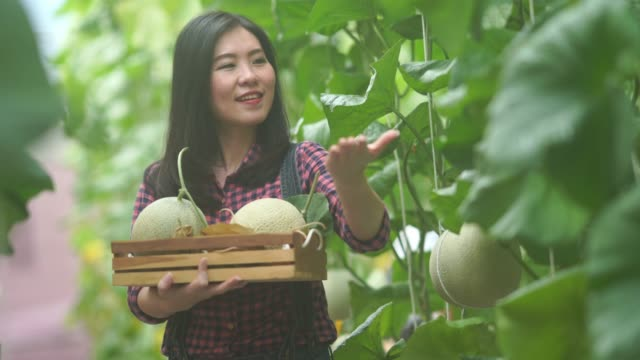Farmer woman  showing fresh melons or  plants growing in greenhouse supported ,  welcome sign