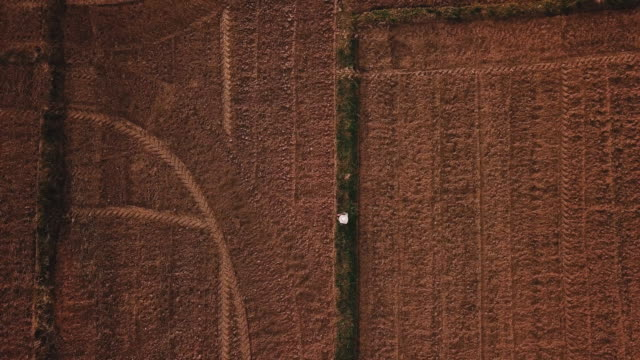 farmer woman sowing wheat in agriculture rice field terrace wheat field during a summer dry season , aerial view - accuracy stock videos & royalty-free footage