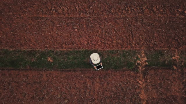 vídeos de stock e filmes b-roll de farmer woman with digital tablet checking organic soil agriculture rice field terrace wheat field during a summer dry season - drone