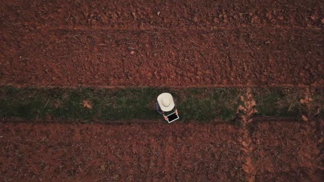 vídeos de stock e filmes b-roll de farmer woman with digital tablet checking organic soil agriculture rice field terrace wheat field during a summer dry season - colheita