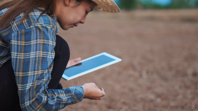 farmer woman with digital tablet checking organic soil agriculture rice field terrace wheat field during a summer dry season - farmer stock videos & royalty-free footage