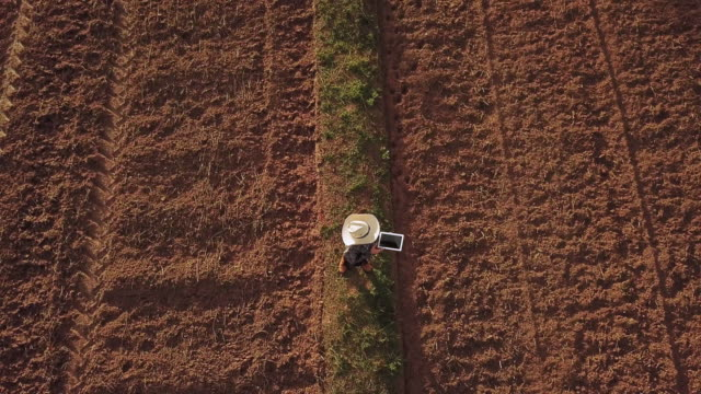 farmer woman with digital tablet checking organic soil agriculture rice field terrace wheat field during a summer dry season , aerial view - cultivated land stock videos & royalty-free footage
