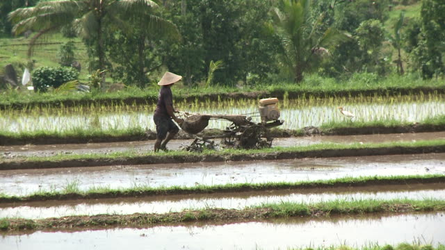 Farmer working at rice paddy in Bali, Indonesia