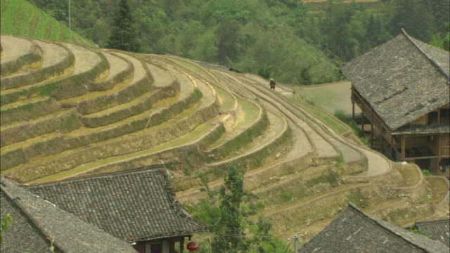 WS HA Farmer working in distance on terraced rice field, Guilin, Guangxi Zhuang Autonomous Region, China