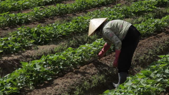 MH LD Farmer Working in Field / Vietnam