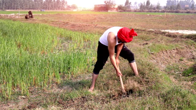 farmer working in the field - weeding stock videos & royalty-free footage