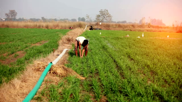 farmer working in the field - irrigation equipment stock videos & royalty-free footage